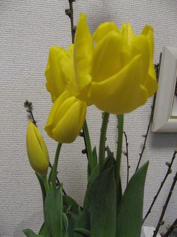 070307flower